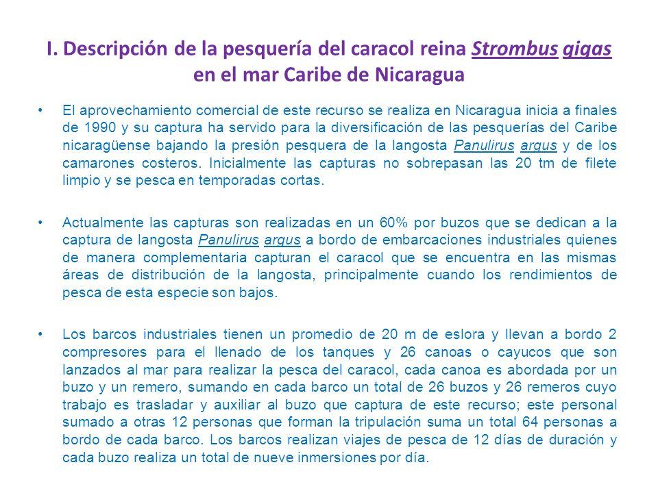 I. Descripción de la pesquería del caracol reina Strombus gigas en el mar Caribe de Nicaragua El aprovechamiento comercial de este recurso se realiza