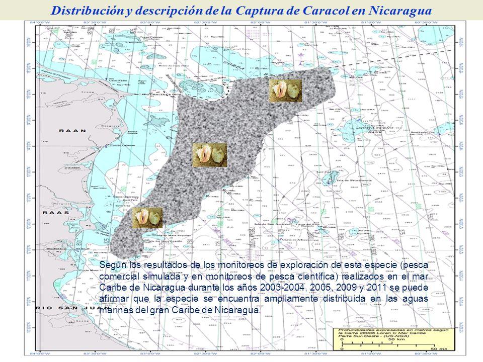 Según los resultados de los monitoreos de exploración de esta especie (pesca comercial simulada y en monitoreos de pesca científica) realizados en el
