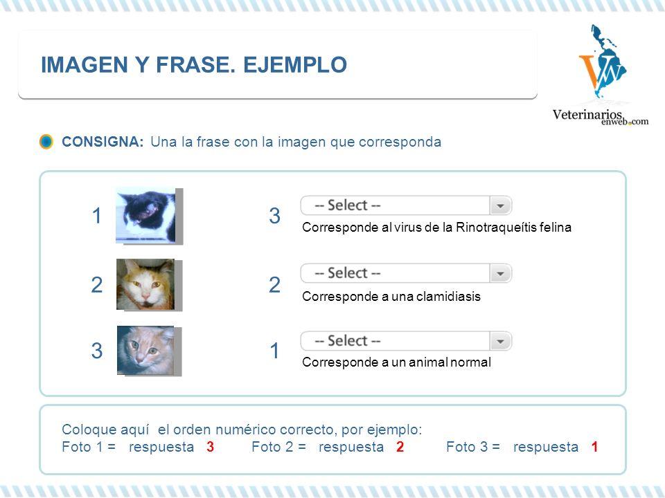 IMAGEN Y FRASE. EJEMPLO Corresponde al virus de la Rinotraqueítis felina Corresponde a una clamidiasis Corresponde a un animal normal 3 2 1 1 2 3 Colo