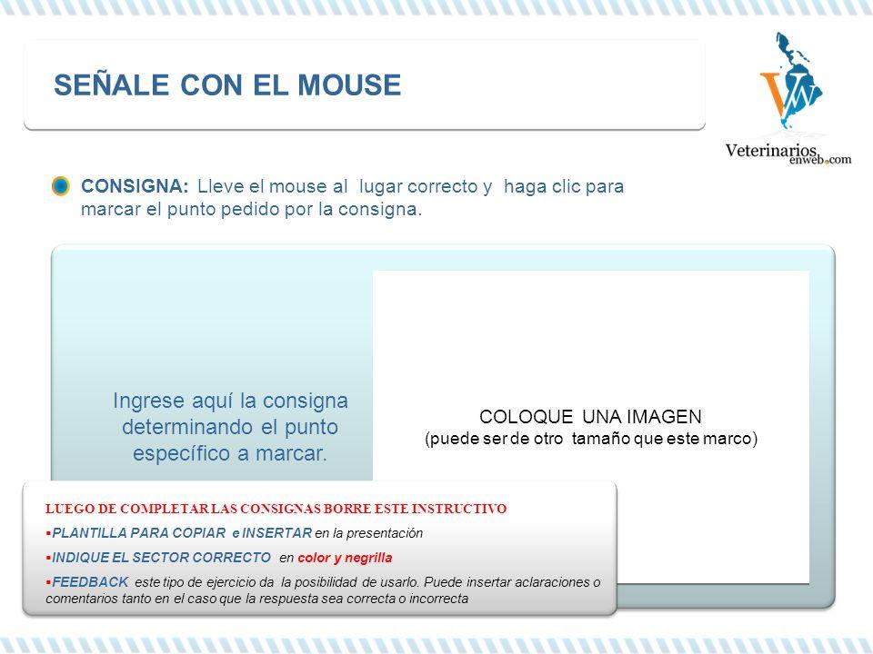 CONSIGNA: Lleve el mouse al lugar correcto y haga clic para marcar el punto pedido por la consigna. Ingrese aquí la consigna determinando el punto esp