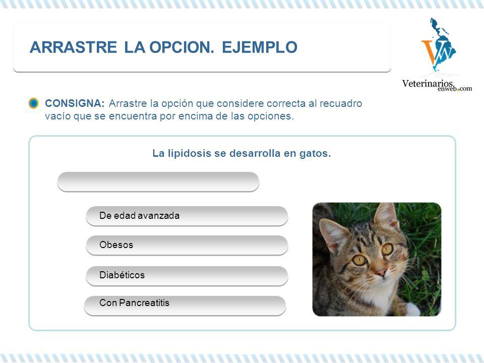 La lipidosis se desarrolla en gatos. ARRASTRE LA OPCION. EJEMPLO De edad avanzada Obesos Diabéticos Con Pancreatitis CONSIGNA: Arrastre la opción que
