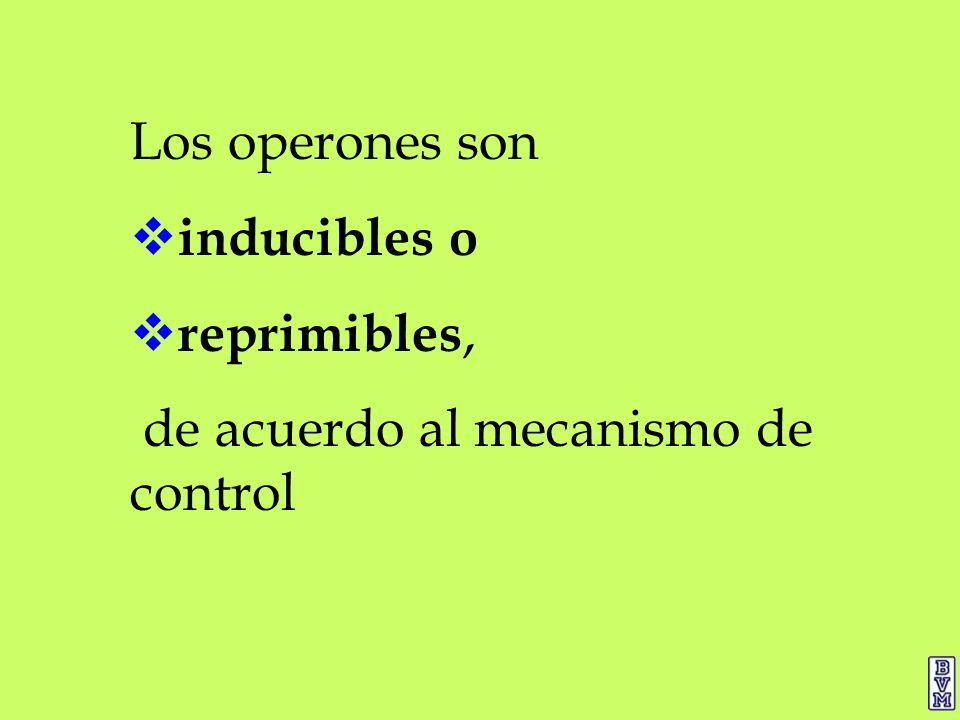 Los operones son inducibles o reprimibles, de acuerdo al mecanismo de control