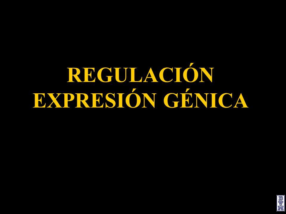 REGULACIÓN EXPRESIÓN GÉNICA