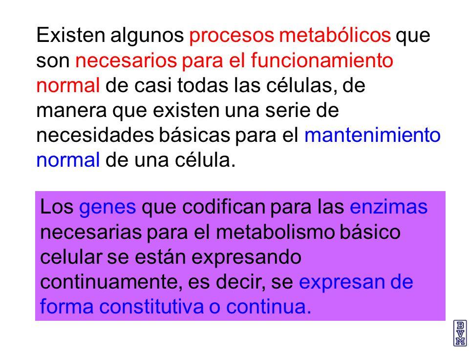 Existen algunos procesos metabólicos que son necesarios para el funcionamiento normal de casi todas las células, de manera que existen una serie de ne