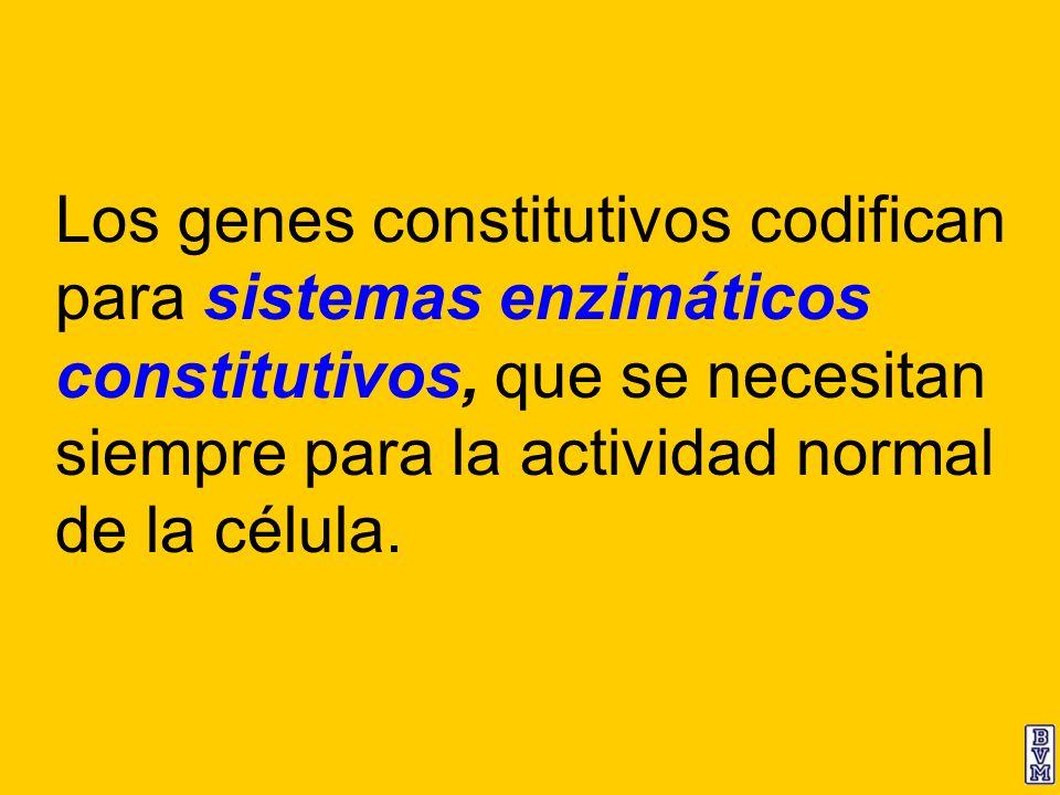 Los genes constitutivos codifican para sistemas enzimáticos constitutivos, que se necesitan siempre para la actividad normal de la célula.