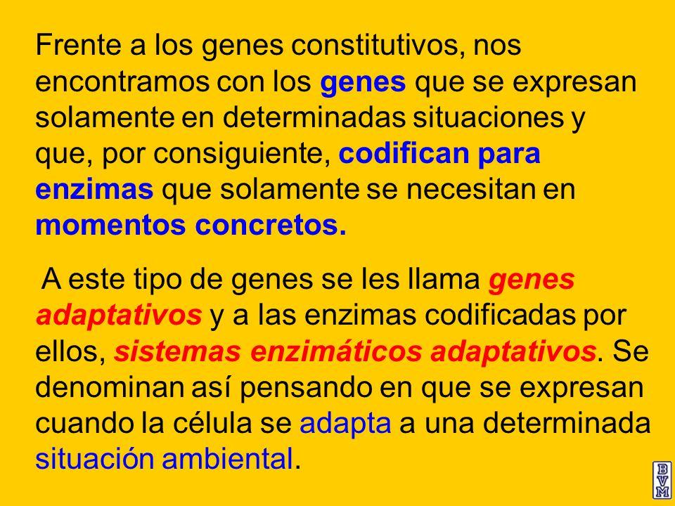 Frente a los genes constitutivos, nos encontramos con los genes que se expresan solamente en determinadas situaciones y que, por consiguiente, codific