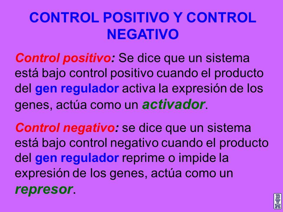 CONTROL POSITIVO Y CONTROL NEGATIVO Control positivo: Se dice que un sistema está bajo control positivo cuando el producto del gen regulador activa la