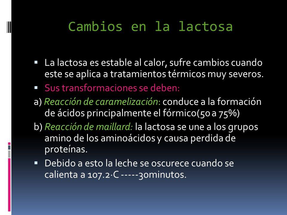 Cambios en la lactosa La lactosa es estable al calor, sufre cambios cuando este se aplica a tratamientos térmicos muy severos. Sus transformaciones se