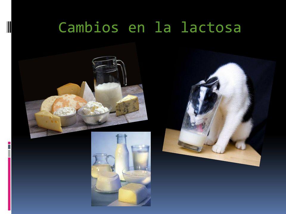 Cambios en la lactosa