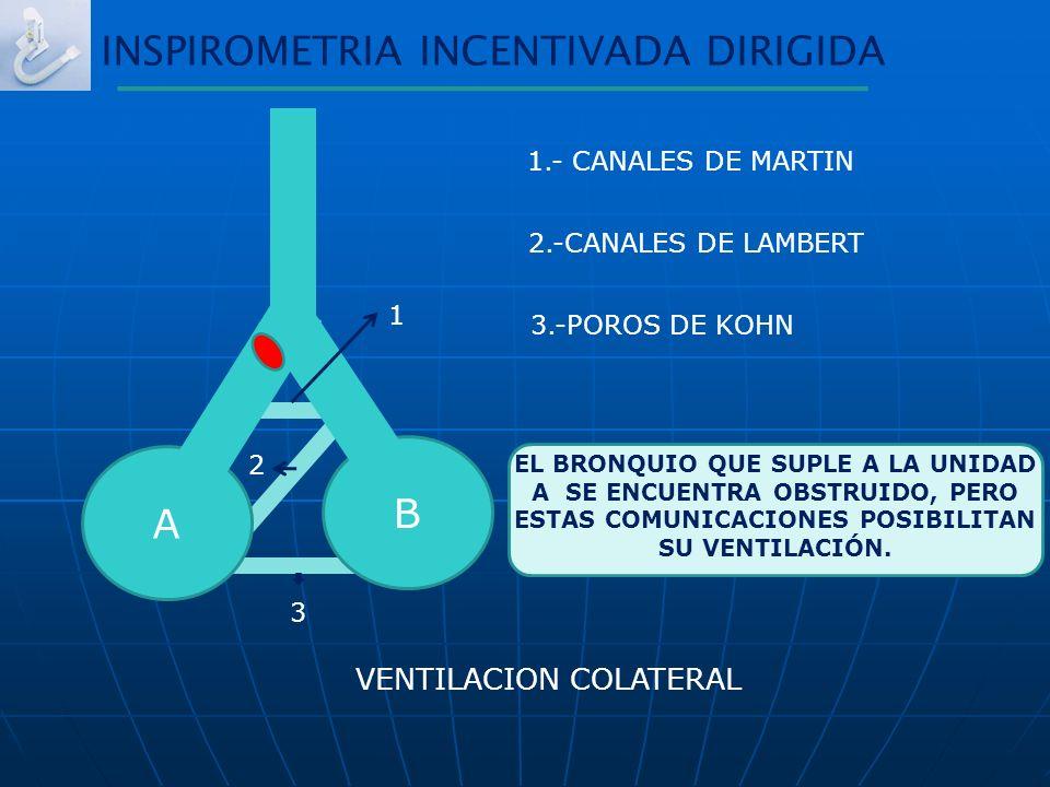1.- CANALES DE MARTIN 2.-CANALES DE LAMBERT 3.-POROS DE KOHN INSPIROMETRIA INCENTIVADA DIRIGIDA EL BRONQUIO QUE SUPLE A LA UNIDAD A SE ENCUENTRA OBSTR