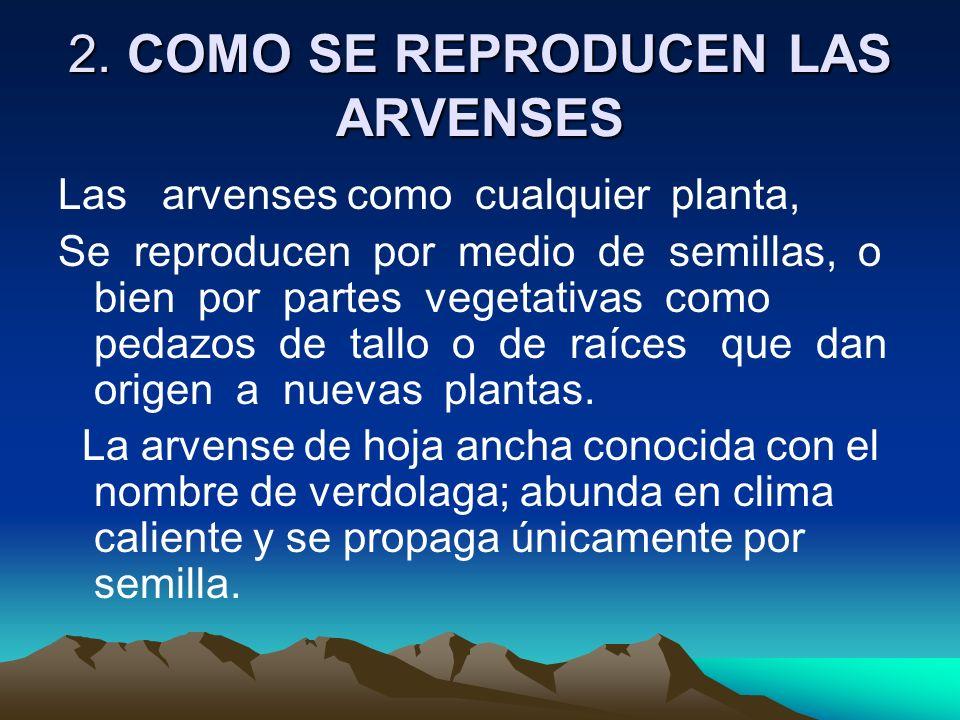 2. COMO SE REPRODUCEN LAS ARVENSES Las arvenses como cualquier planta, Se reproducen por medio de semillas, o bien por partes vegetativas como pedazos