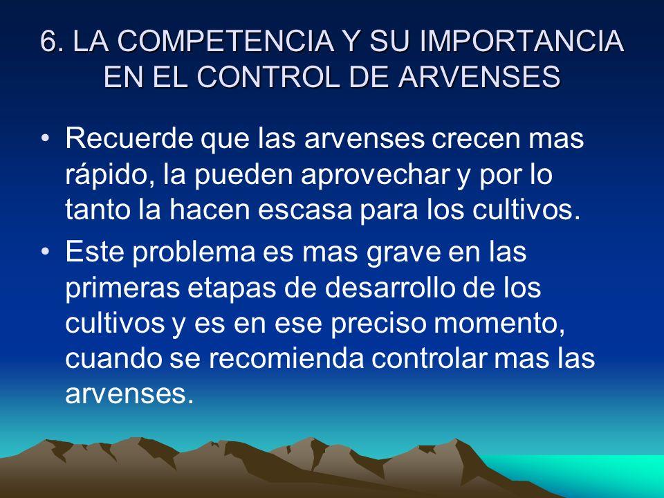 6. LA COMPETENCIA Y SU IMPORTANCIA EN EL CONTROL DE ARVENSES Recuerde que las arvenses crecen mas rápido, la pueden aprovechar y por lo tanto la hacen