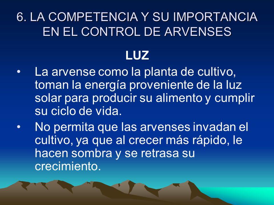 6. LA COMPETENCIA Y SU IMPORTANCIA EN EL CONTROL DE ARVENSES LUZ La arvense como la planta de cultivo, toman la energía proveniente de la luz solar pa