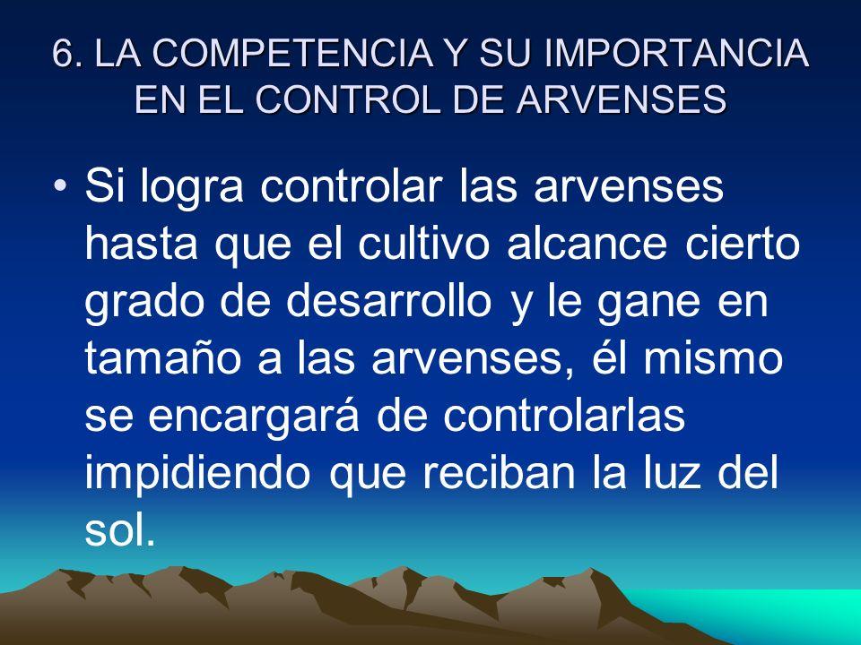 6. LA COMPETENCIA Y SU IMPORTANCIA EN EL CONTROL DE ARVENSES Si logra controlar las arvenses hasta que el cultivo alcance cierto grado de desarrollo y
