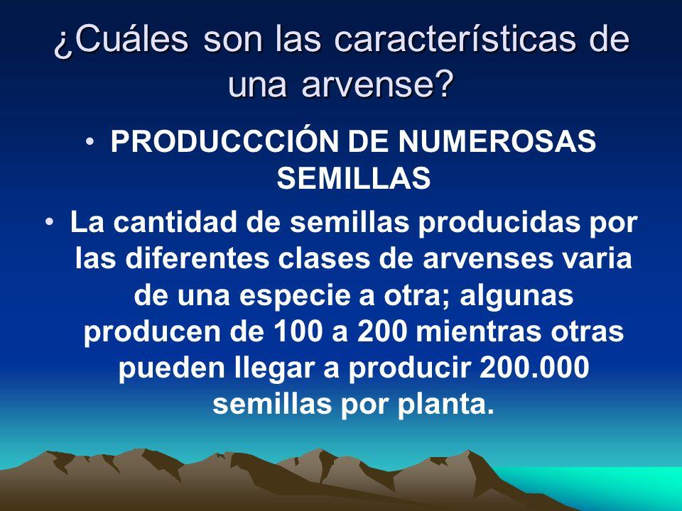 ¿Cuáles son las características de una arvense? PRODUCCCIÓN DE NUMEROSAS SEMILLAS La cantidad de semillas producidas por las diferentes clases de arve
