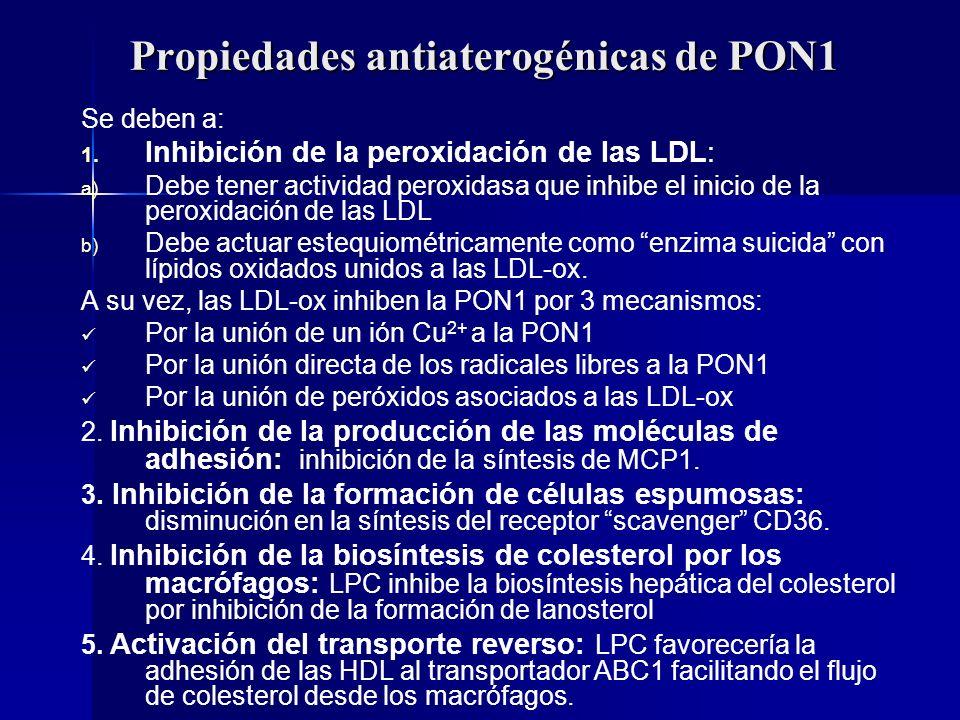 Propiedades antiaterogénicas de PON1 Se deben a: 1. 1. Inhibición de la peroxidación de las LDL: a) a) Debe tener actividad peroxidasa que inhibe el i