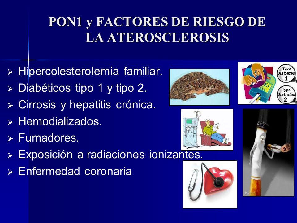 PON1 y FACTORES DE RIESGO DE LA ATEROSCLEROSIS Hipercolesterolemia familiar. Diabéticos tipo 1 y tipo 2. Cirrosis y hepatitis crónica. Hemodializados.