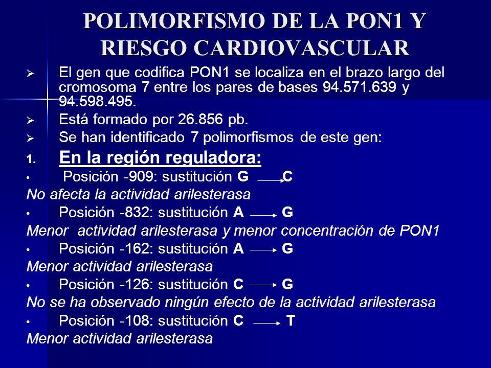 POLIMORFISMO DE LA PON1 Y RIESGO CARDIOVASCULAR El gen que codifica PON1 se localiza en el brazo largo del cromosoma 7 entre los pares de bases 94.571