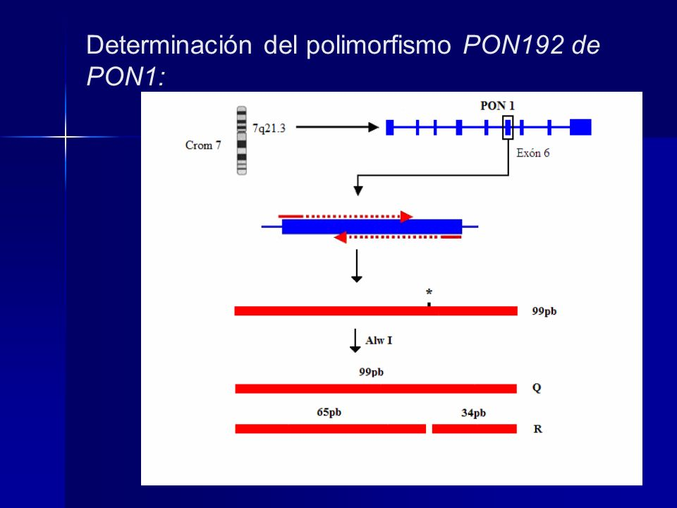 Determinación del polimorfismo PON192 de PON1: