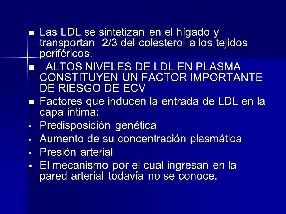 Las LDL se sintetizan en el hígado y transportan 2/3 del colesterol a los tejidos periféricos. Las LDL se sintetizan en el hígado y transportan 2/3 de