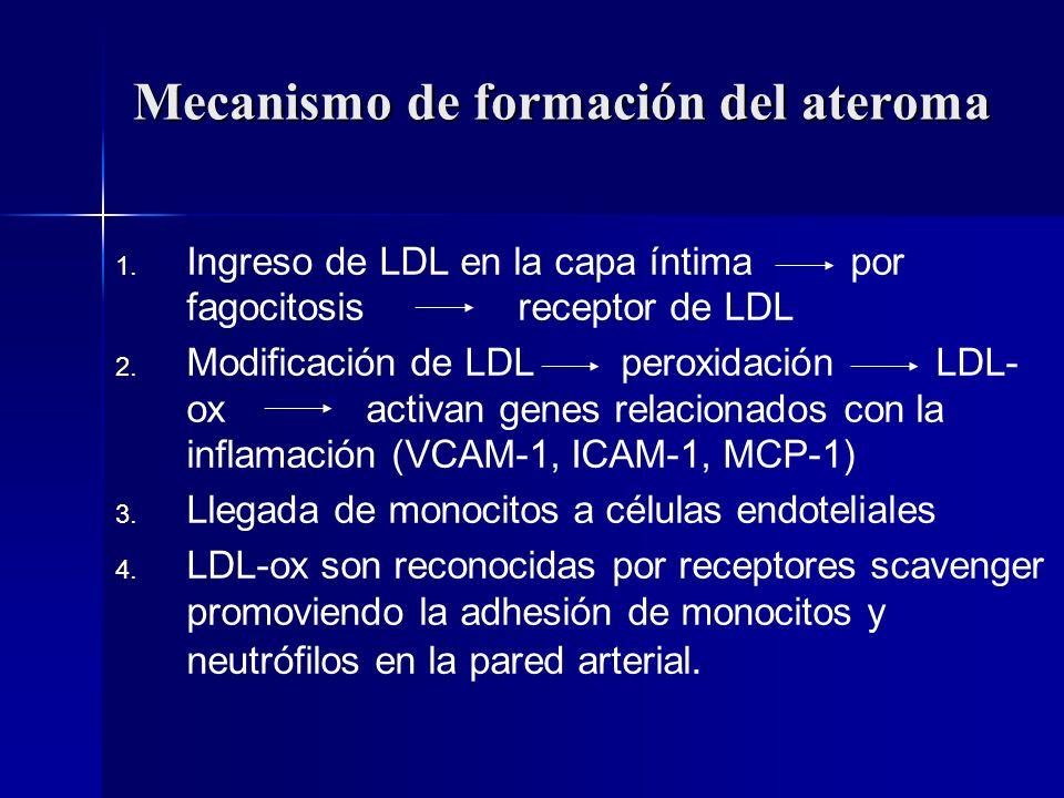 Mecanismo de formación del ateroma 1. 1. Ingreso de LDL en la capa íntima por fagocitosis receptor de LDL 2. 2. Modificación de LDL peroxidación LDL-