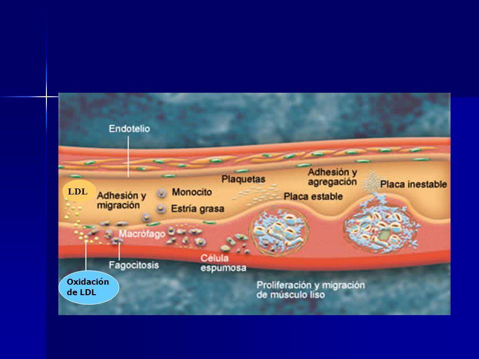 HDL Y ATEROSCLEROSIS Las HDL son las lipoproteínas más pequeñas y más densas.