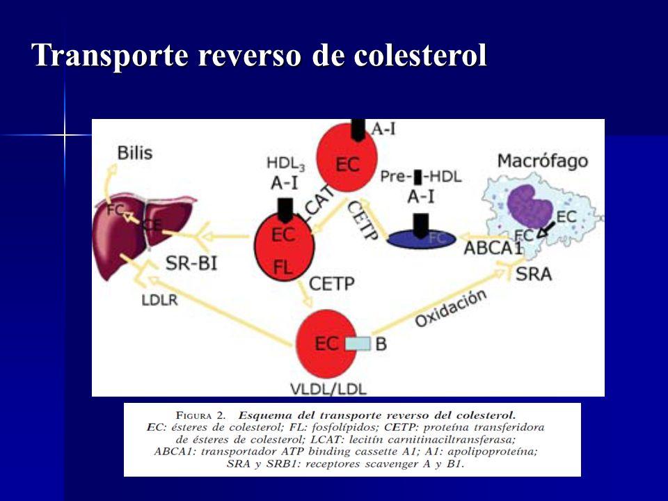 Transporte reverso de colesterol