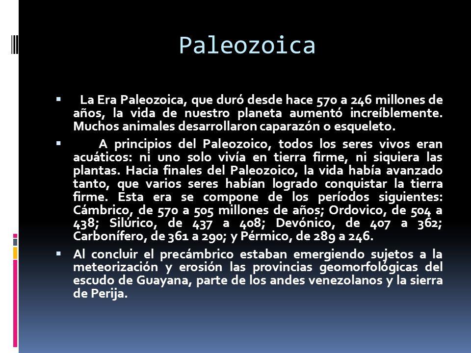 Paleozoica La Era Paleozoica, que duró desde hace 570 a 246 millones de años, la vida de nuestro planeta aumentó increíblemente. Muchos animales desar