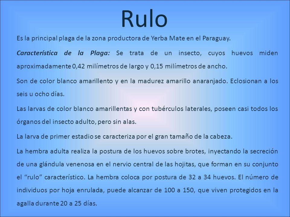 Rulo Es la principal plaga de la zona productora de Yerba Mate en el Paraguay. Característica de la Plaga: Se trata de un insecto, cuyos huevos miden