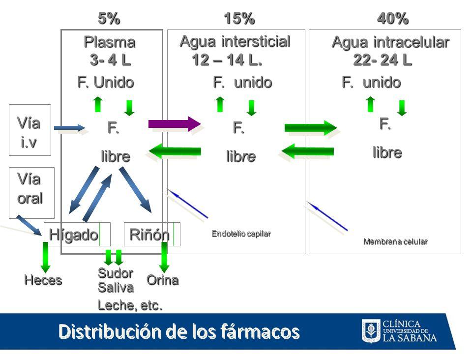 Distribución de los fármacos Agua intracelular Orina Plasma Agua intersticial 5%15%40% Vía i.v Vía oral 3- 4 L 12 – 14 L. 22- 24 L F. Unido F. unido F
