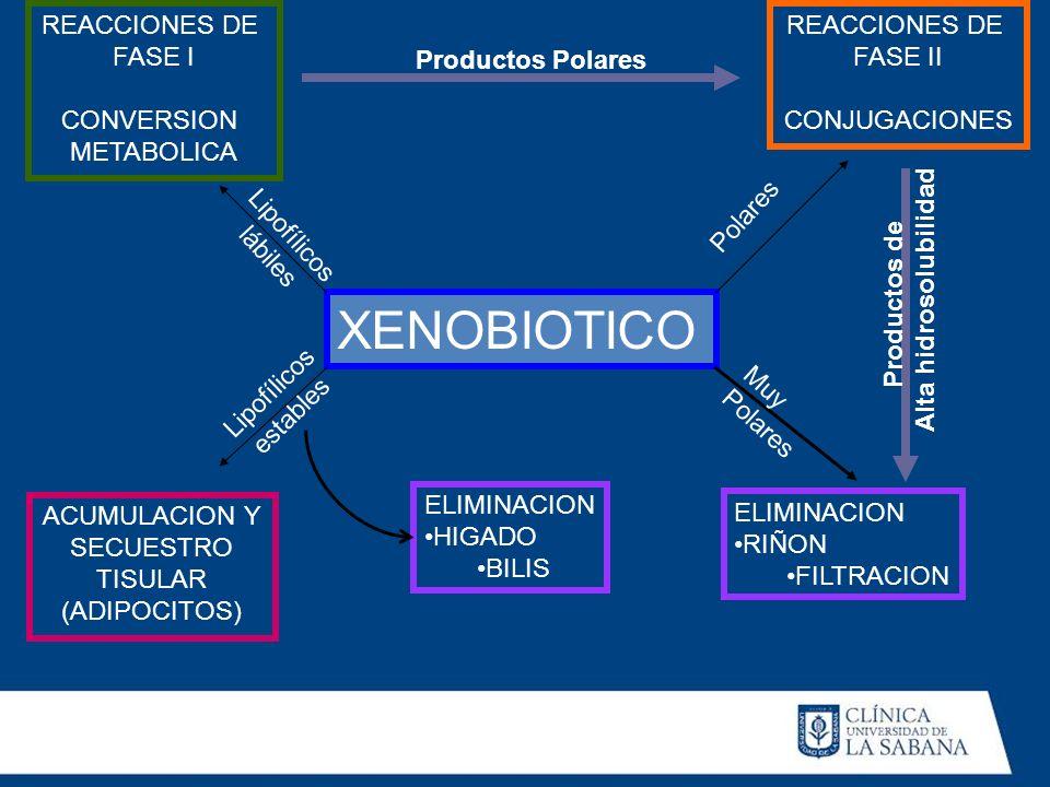 XENOBIOTICO Polares Muy Polares Lipofílicos lábiles Lipofílicos estables REACCIONES DE FASE I CONVERSION METABOLICA REACCIONES DE FASE II CONJUGACIONE