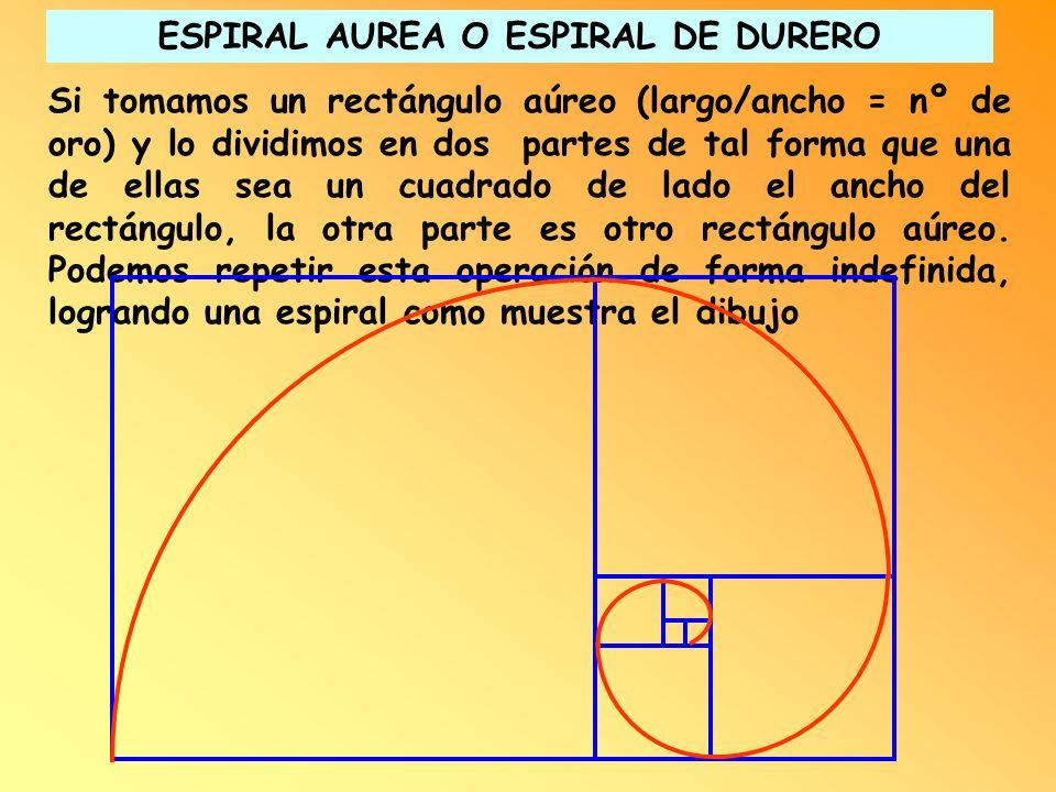 Si tomamos un rectángulo aúreo (largo/ancho = nº de oro) y lo dividimos en dos partes de tal forma que una de ellas sea un cuadrado de lado el ancho d