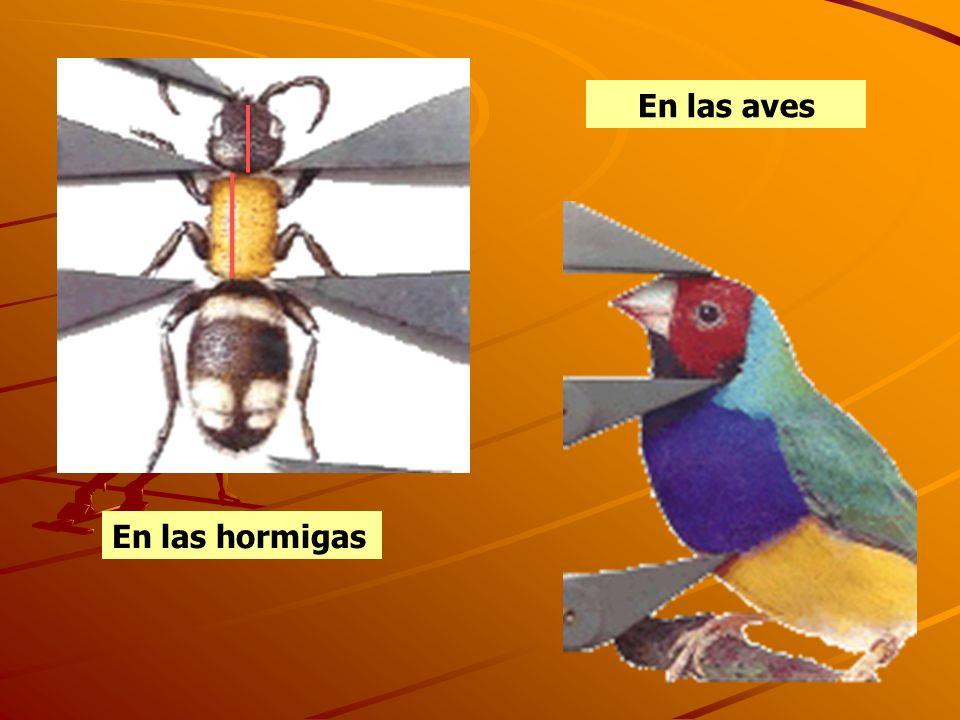 En las hormigas En las aves