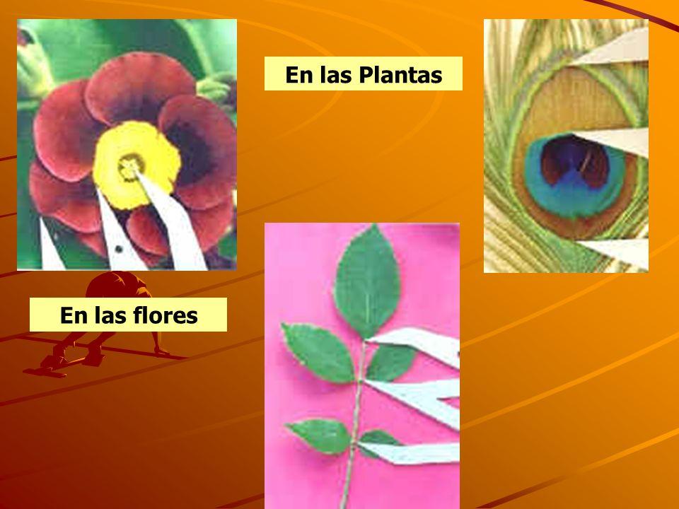 En las flores En las Plantas