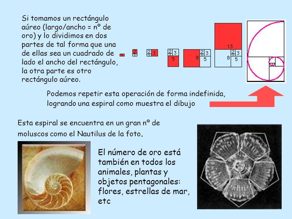 Esta espiral se encuentra en un gran nº de moluscos como el Nautilus de la foto. El número de oro está también en todos los animales, plantas y objeto