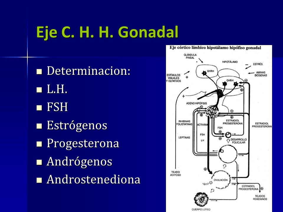Eje C. H. H. Gonadal Determinacion: Determinacion: L.H. L.H. FSH FSH Estrógenos Estrógenos Progesterona Progesterona Andrógenos Andrógenos Androstened