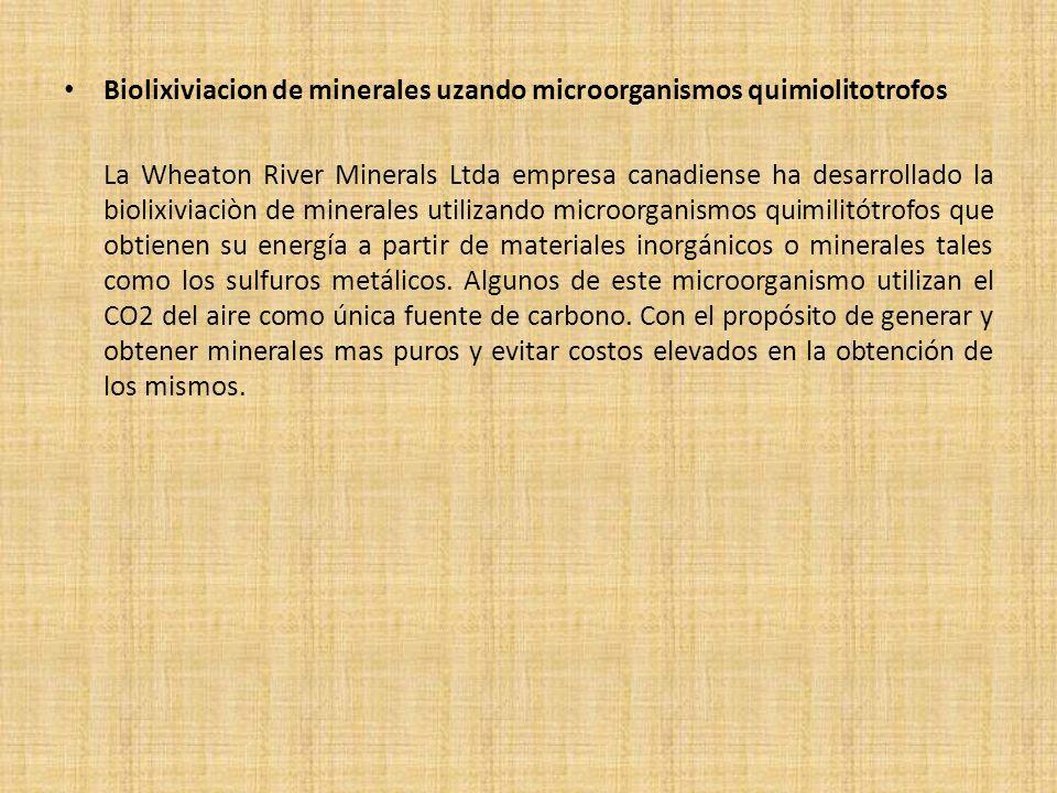 Biolixiviacion de minerales uzando microorganismos quimiolitotrofos La Wheaton River Minerals Ltda empresa canadiense ha desarrollado la biolixiviaciò