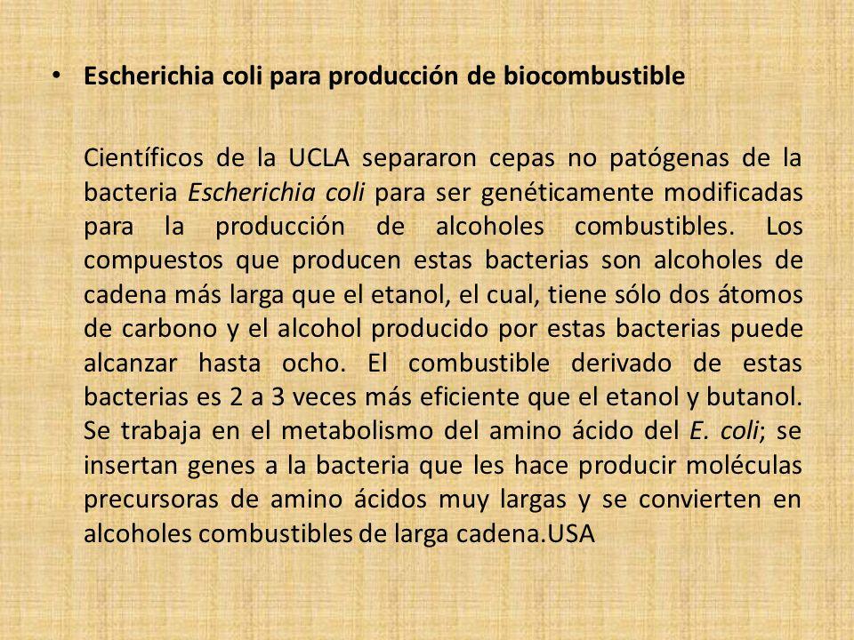 Escherichia coli para producción de biocombustible Científicos de la UCLA separaron cepas no patógenas de la bacteria Escherichia coli para ser genéti