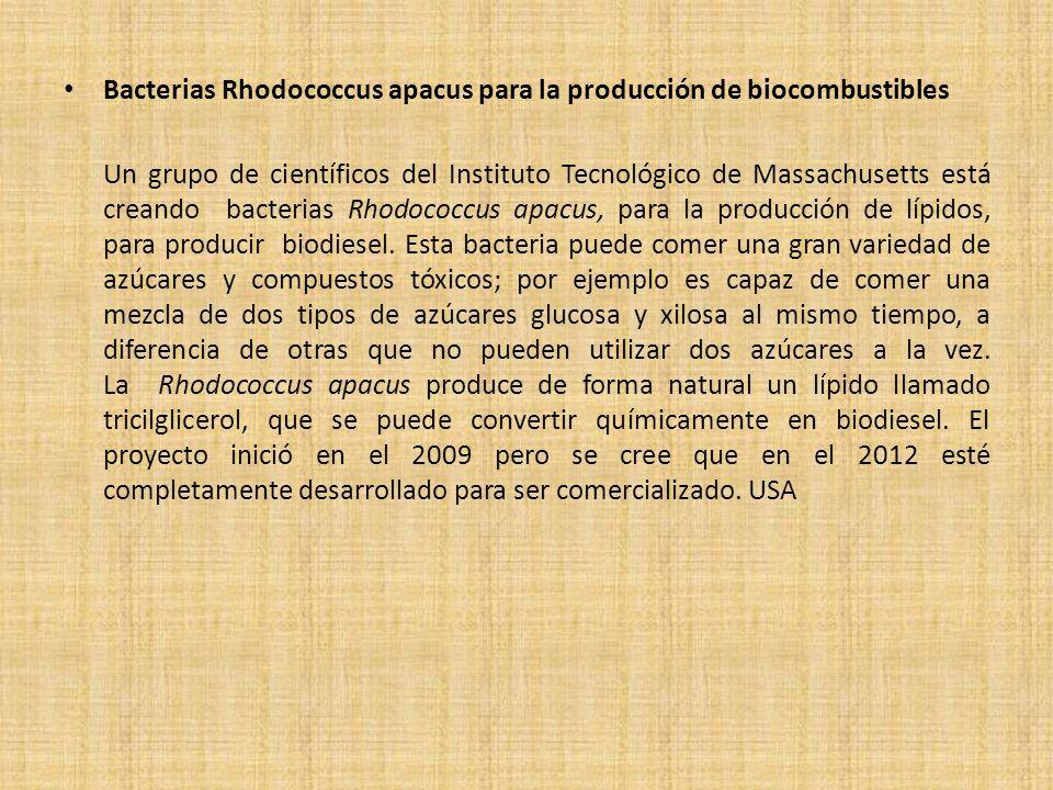 Bacterias Rhodococcus apacus para la producción de biocombustibles Un grupo de científicos del Instituto Tecnológico de Massachusetts está creando bac