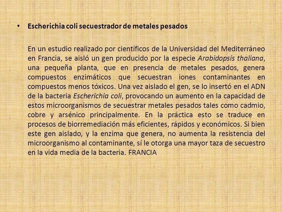 Bibliografia.- www.scribd.com/Biotecnologia-de-Minerales Sauge-Merle, S., Cuiné, S., Carrier, P., Lecompte-Pradines, C., Luu, D., Peltier, G., 2002, Enhanced Toxic Metal Accumulation in Engineered Bacterial Cells Expressing Arabidopsis thaliana Phytochelain Synthase Iturriaga, G., 2007, El potencial de la biotecnología para el desarrollo de cultivos resistentes a la sequía http://www.whybiotech.com/mexico.asp?id=2703 Sheyla Bonell Rosabal.Petróleo y biotecnología: análisis del estado del arte y tendencias, 2008.