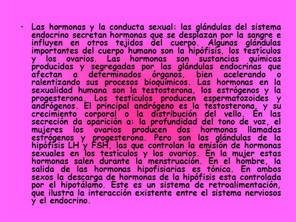 Las hormonas y la conducta sexual: las glándulas del sistema endocrino secretan hormonas que se desplazan por la sangre e influyen en otros tejidos del cuerpo.