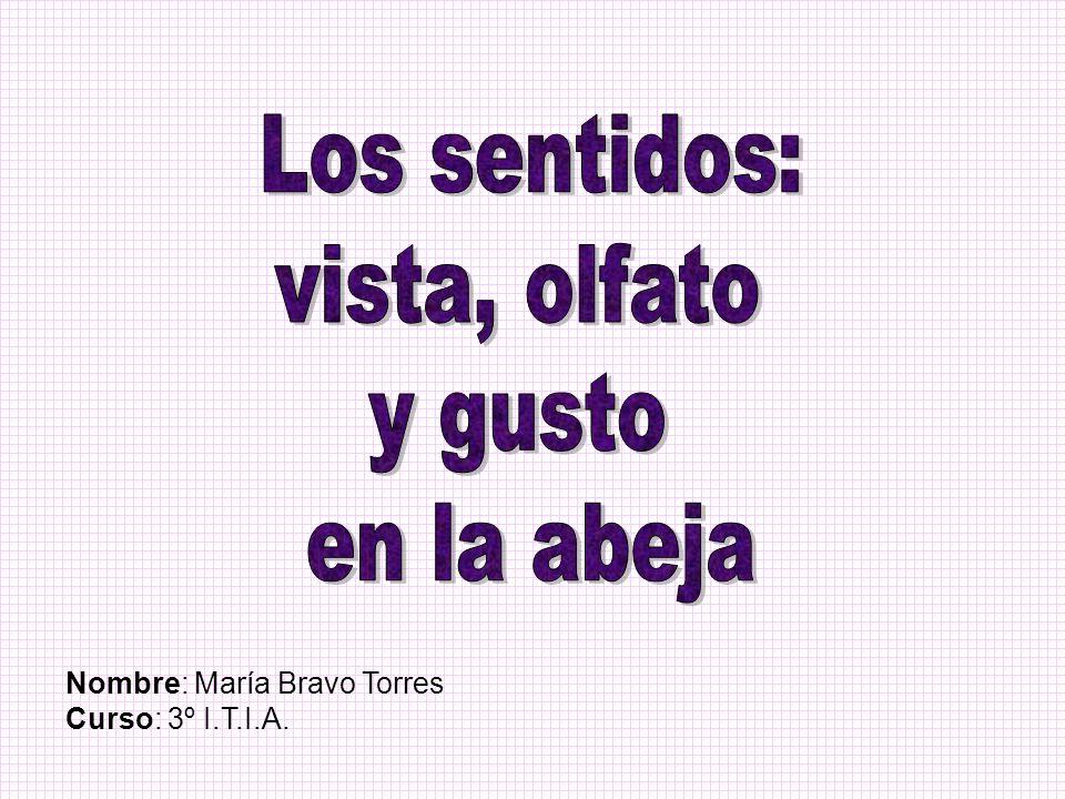 Nombre: María Bravo Torres Curso: 3º I.T.I.A.