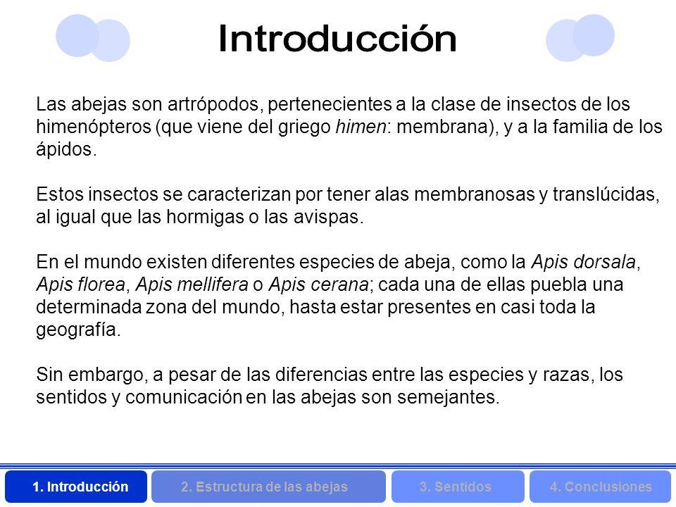 2. Estructura de las abejas 3. Sentidos4. Conclusiones 1. Introducción Las abejas son artrópodos, pertenecientes a la clase de insectos de los himenóp