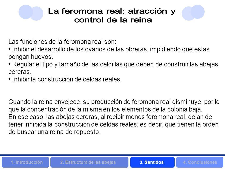 2. Estructura de las abejas 3. Sentidos4. Conclusiones 1. Introducción Las funciones de la feromona real son: Inhibir el desarrollo de los ovarios de