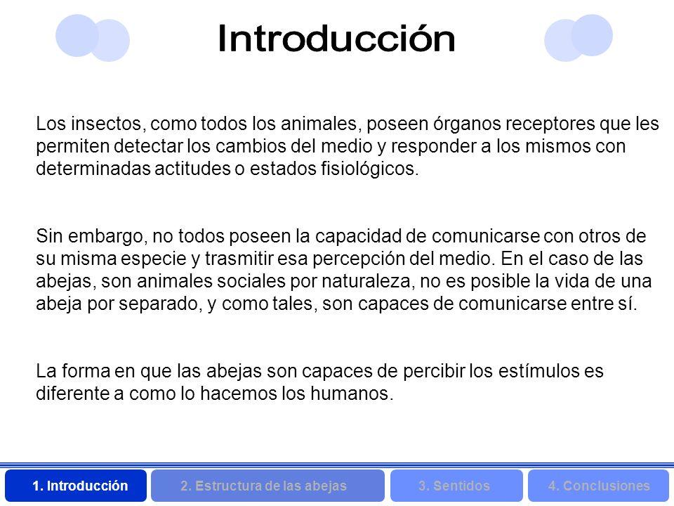 2. Estructura de las abejas 3. Sentidos4. Conclusiones 1. Introducción Los insectos, como todos los animales, poseen órganos receptores que les permit