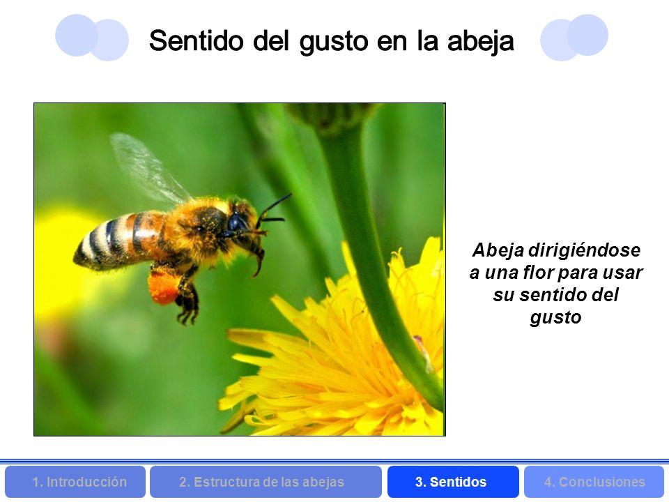 2. Estructura de las abejas 3. Sentidos4. Conclusiones 1. Introducción Abeja dirigiéndose a una flor para usar su sentido del gusto