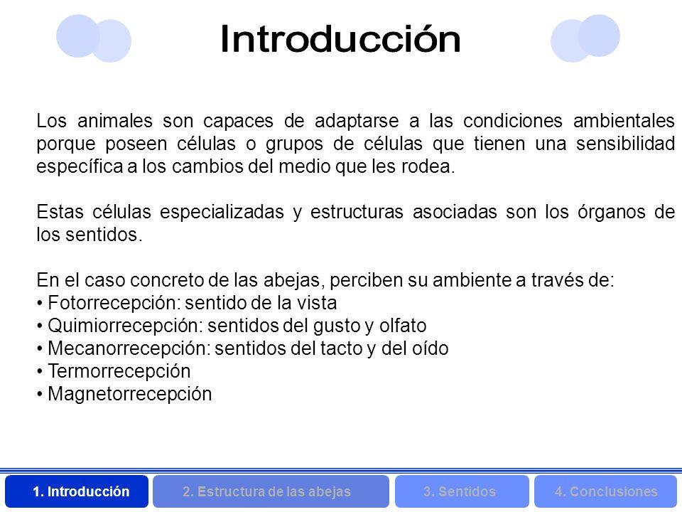 2. Estructura de las abejas 3. Sentidos4. Conclusiones 1. Introducción Los animales son capaces de adaptarse a las condiciones ambientales porque pose