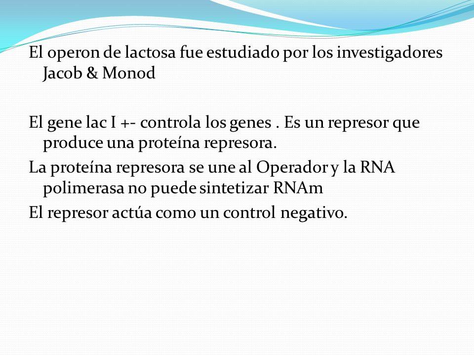 El operon de lactosa fue estudiado por los investigadores Jacob & Monod El gene lac I +- controla los genes. Es un represor que produce una proteína r