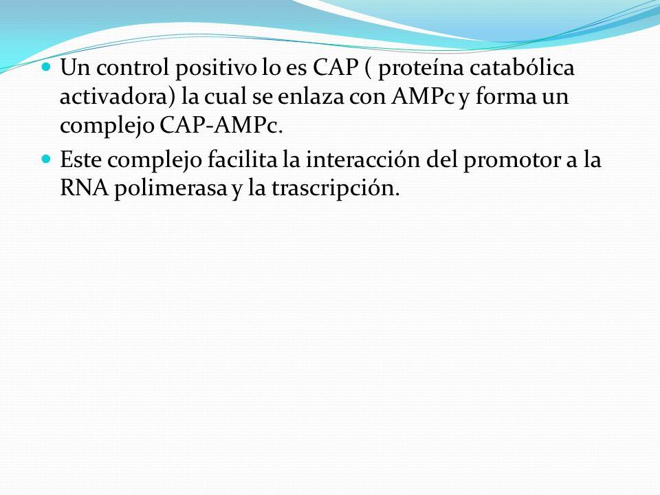 Un control positivo lo es CAP ( proteína catabólica activadora) la cual se enlaza con AMPc y forma un complejo CAP-AMPc. Este complejo facilita la int