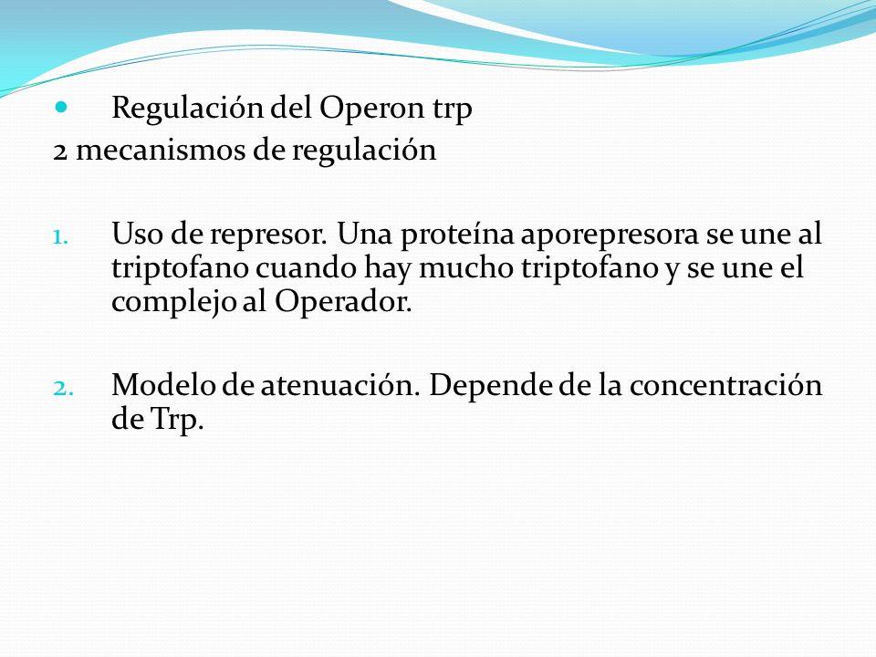Regulación del Operon trp 2 mecanismos de regulación 1. Uso de represor. Una proteína aporepresora se une al triptofano cuando hay mucho triptofano y